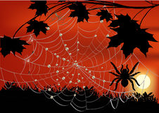 Maple branch and spider in web. Illustration with maple branch and spider web Stock Images