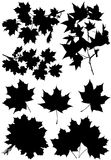 Set maple branches and leaves. Stock Images