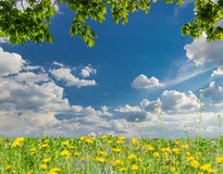 Maple branches, sky with clouds and lawn with dandelions Stock Photos