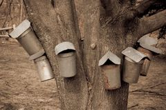 Maple Buckets. Old style maple buckets for gathering sap to make syrup from a Maple tree Royalty Free Stock Image