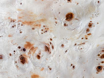 Maple burl wood grain texture. Royalty Free Stock Image