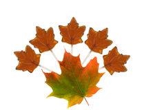 Maple candy and maple leaf Royalty Free Stock Photos