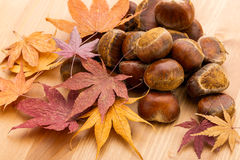 Maple and chestnut Stock Photo