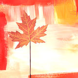 Maple collage Royalty Free Stock Images