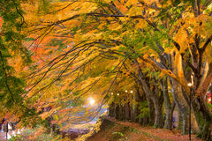 Maple Corridor of Japan Royalty Free Stock Image