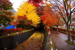 Maple Corridor in Kawaguchiko Royalty Free Stock Images
