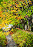 Maple corridor, Kawaguchiko lake, Japan Stock Photos