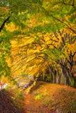 Maple Corridor Of Japan Stock Photos