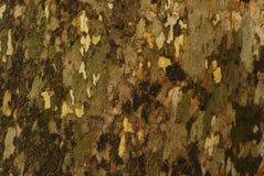 Maple crust detail Stock Image
