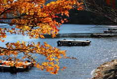 Maple and dock on lake. Wooden docks on a blue lake Royalty Free Stock Images