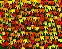Maple fall Royalty Free Stock Image