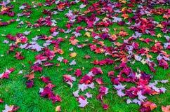 Maple fall Stock Photos