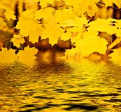 Maple Fall Reflection Stock Photos