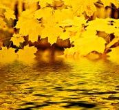 Maple Fall Reflection Stock Photos