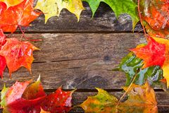 Maple foliage on the able. Colorful maple foliage on the vintage wooden table royalty free stock image