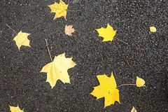 Maple foliage on the asphalted road Stock Images