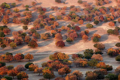 Maple Forest. The maple forest in the grassland of Eastern Inner Mongolia, China Fall of 2006 stock images