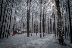 Maple syrup sap bucket and maple sugar shack in a winter woods. A walk through a fresh fallen snow covered woods and a visit to the maple syrup bush sugar shack Stock Photo