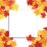 Maple Frame Royalty Free Stock Photography