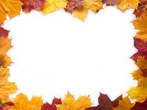 Maple framework Royalty Free Stock Image