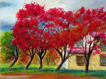 Maple in front of home. Pastel paintings about maple in front of home Royalty Free Stock Photo