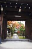 The maple and indoor scenery. He maple and indoor scenery in front of old wooden door Stock Photos