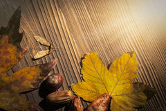 Maple and koelreuteria paniculata leaves, acer seeds,horse chest Royalty Free Stock Image