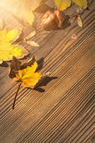 Maple and koelreuteria paniculata leaves, acer seeds on wooden b Royalty Free Stock Photography