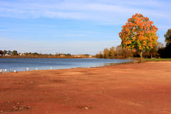 Maple Lake Royalty Free Stock Photo