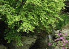 Maple Landscape Royalty Free Stock Photos