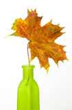Maple leaf. In green bottle isolated on white background Stock Image