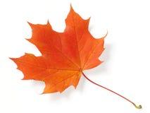 Maple leaf Royalty Free Stock Photo