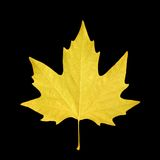 Maple leaf. Yellow maple leaf over black background Royalty Free Stock Photo