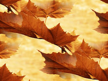Maple leaf 2. Maple leaf in autumnal park Royalty Free Stock Image