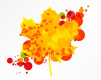 Maple leaf. Colorful autumn maple leaf, isolated. EPS10 vector Royalty Free Stock Photography