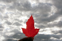 Maple_leaf Lizenzfreies Stockfoto