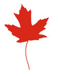 Maple leaf. Red maple leaf isolated and with clipping path stock illustration