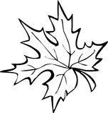 Maple leaf. Black-and-white leaf on white background Stock Photography