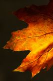 Maple leaf against the sun Royalty Free Stock Photo