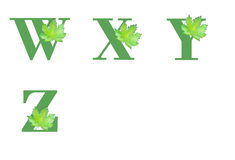 Maple Leaf Alphabet. Set 5 Stock Photo