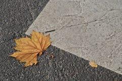 Maple leaf on asphalt road in Autumn Stock Photos