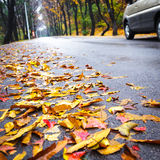 Maple Leaf on asphalt road Stock Images