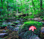Maple leaf in the autumn Stock Photos