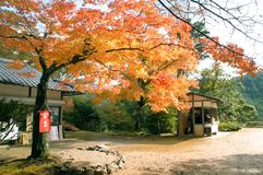 Maple leaf autumn in Kyoto,Japan royalty free stock photography