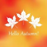 Maple leaf autumn orange blurred background.  Stock Images