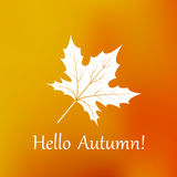 Maple leaf autumn orange blurred background.  Royalty Free Stock Photography