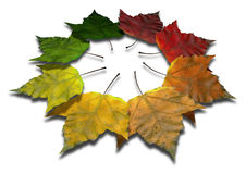 Maple Leaf Autumn Spectrum Royalty Free Stock Images