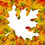 Maple Leaf Background Royalty Free Stock Photos