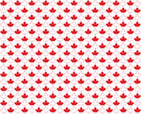 Maple Leaf Background Stock Photography