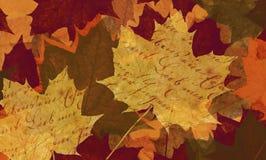 Maple leaf background Stock Photography